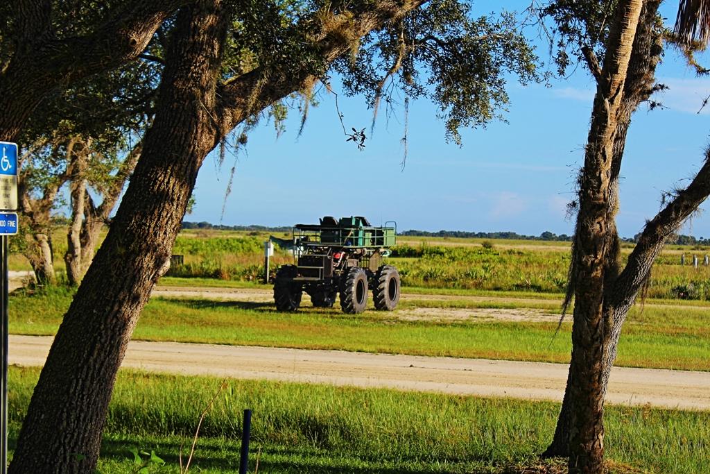 Prairie Buggy Ride